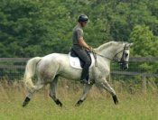 Horse Market | Dominick | Dressage Daily
