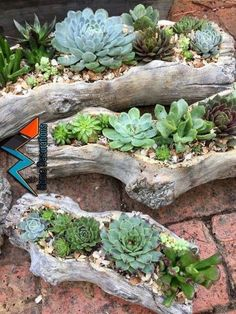 29 rock garden and backyard ideas landscaping for make you happy 6 beautiful front yard rock garden landscaping ideas Succulent Gardening, Planting Succulents, Garden Plants, Container Gardening, Succulent Rock Garden, Succulent Arrangements, Succulent Containers, Succulents Diy, Succulent Ideas