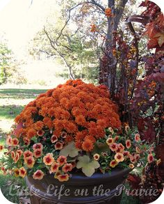 Fall Containers by Megan Hemphill (Prairie & Co), via Flickr