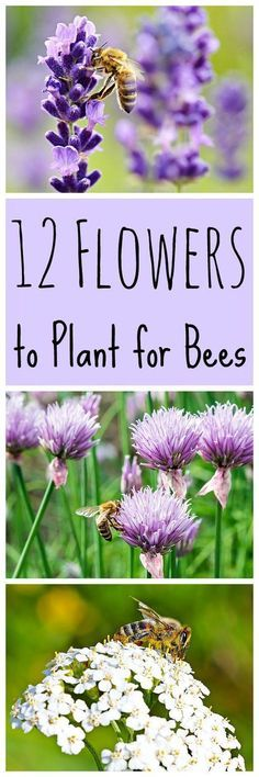 15 Best Flowers for a New Baby images in 2014 | Beautiful