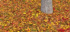 10 easy fall projects