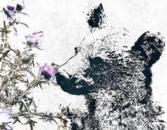 """Check out new work on my @Behance portfolio: """"Cute bear"""" http://be.net/gallery/48312331/Cute-bear"""