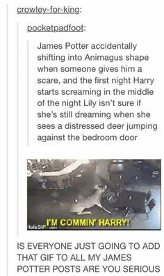Memes Funny Mean Harry Potter 37 Ideas Harry Potter Jokes, Harry Potter Fandom, Harry Potter Tumblr, Drarry, Harry Potter Universe, Scorpius And Rose, Maxon Schreave, No Muggles, Yer A Wizard Harry