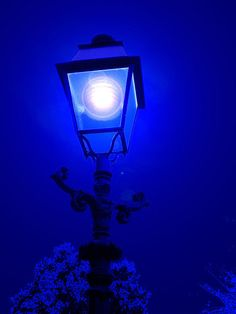midnight blue | by marcel patti~