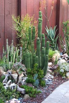 Fabulous Cactus Garden Landscape Idea For Side Home Garden : 12 Beautiful Cactus Landscaping Ideas For Dreamy Backyard Or Front Yard Desert Garden #gardenforbeginnerslayout #cactusgarden