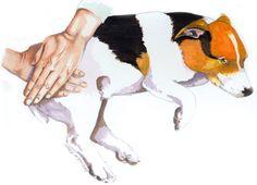 Guide to dog massage to help 4 common issues: Daily massage, Calming massage, Warm-up massage, and Relieving Soreness Dog massage [Source: www.moderndogmagazine.com]