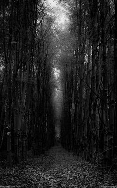 """thliii:  10.24.13           Dark Path """"Once you start down the dark path, forever will it dominate your destiny, consume you it w..."""