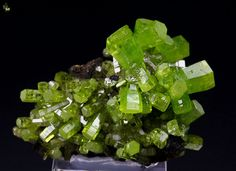 From a new find of top Pyromorphite comes this gorgeous specimen of crystals grown on black base which underlines them very well. They form groups and sprays of hexagonal crystals with vivid and intense green color. They have superb luster and fresh appearance. The most amazing aspect of this specimen is the quality of the Pyromorphite – the crystals are transparent and gem. The green color is quite attractive and contrast very strongly.