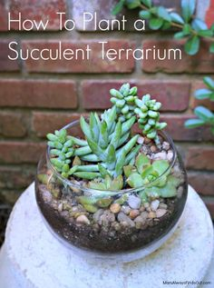 DIY Succulent Terrarium in a Glass Bubble Bowl. Garden Craft Tutorial at Mom Always Finds Out.