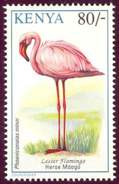flamingo stamps from Kenya Flamingo Gifts, Flamingo Art, Pink Flamingos, Pink Bird, Vintage Stamps, Stamp Collecting, Mail Art, Bird Feathers, Pretty In Pink