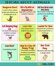 Animal Idioms in English