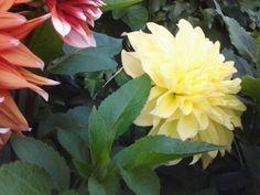 Tuin2015 zomer