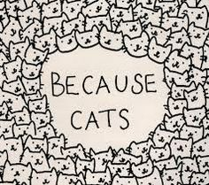 because cats - that's why.