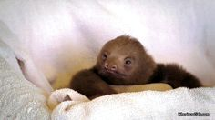 The Most Thoughtful Sloth | The 40 Cutest GIFs In The History Of The Internet