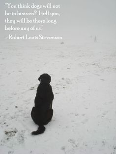 All dogs go the Heaven. All Dogs, I Love Dogs, Puppy Love, Cute Dogs, Animal Quotes, Dog Quotes, Dalai Lama, Animals Beautiful, Cute Animals