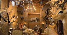 These 11 Hunters' Trophy Rooms Are Completely Unbelievable Staining Wood Cabinets, Taxidermy Display, Safari Room, Deer Mounts, Trophy Rooms, Carpet Sale, Shower Curtain Rods, Residential Interior Design, House Rooms