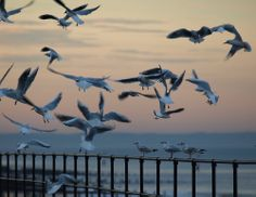 Gulls at Sunset by Tom Wood East Yorkshire, Gulls, Interior And Exterior, Fighter Jets, Bird, Sunset, Space, Animals, Floor Space