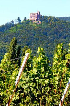 German Castle in Rhine Valley (Rheinland Pfalz) with Vineyards.  Photo: Bianca Baker
