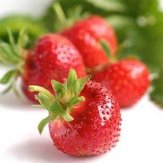 """Sorte Mit dem klingenden Namen """"Pegasus"""" erfreut uns diese Erdbeere mit sagenhaften, großen Früchten in kräftigem Rot. Die mild-aromatische Sorte ist recht resistent gegen Krankheiten und bringt hohe Erträge. """"Pegasus"""" ist eine eher späte Sorte Ob einfach pur genossen, in Desserts mit Joghurt, kreativen Salaten oder einfach als Marmelade, Erdbeeren sind in jeglicher Form ein Hochgenuss und für viele das Highlight des Gartenjahres. Das beliebte Rosengewächs lässt sich schon auf kleinstem Raum… Pegasus, Form, Strawberry, Fruit, Desserts, Crop Rotation, Mulches, Medical Conditions, Harvest"""