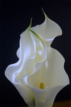 ~~Calla Lilies by Joseph Nazoa~~ I carried these on my wedding day - except they were cream-colored........