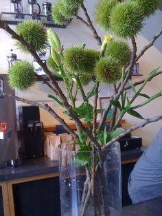 Castanea sativa (chestnut), my favorite flowers.  Seen @fourbarrel