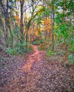 On instagram by terrymccomb #landscape #contratahotel (o) http://ift.tt/1ZyNvNe I walk down this trail?  #camping #naturelovers #mountains #outdoors #trees #getoutside #summertime #bushcraft #forest #rockclimbing #natureart #granite #beauty #freedom #friends #vista #fitness #yoga #exercise #trek #photographer #artistic #instagood #instadaily #happy #fun #photographer #art #love