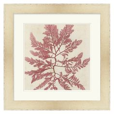 Have to have it. Brilliant Seaweed V Wall Art by Vision Studio - 24W x 24H in. - $173.4 @hayneedle