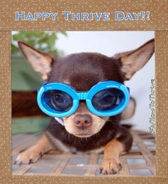 Thrive by Le-vel Happy Thrive Day! Check us out of Facebook and Like our page www.fb.com/levelbrands.  Then register for free at http://reedbrandi03.le-vel.com Email me with any questions at brandireed2003@hotmail.com Lets get you Thriving today!!!