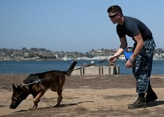 Master-at-Arms 2nd Class Kyle Cox handles military working dog, Ico, as part of a patrol and scouting training exercise at Naval Base Coronado. Military working dogs are trained to provide deterrence, patrol services and drug or bomb detection. Join the conversation on social media using #warfighting.