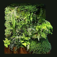 Jardines Verticales, Patrick Blanc