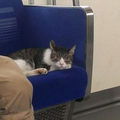 While the Tokyo subway system might seem confusing for many, this cat laughs at them all. The smart feline has been spotted taking the city's Seibu Ikebukuro Line at least several times. I Love Cats, Cool Cats, Cat Vet, Tokyo Subway, Japanese Cat, Cat Boarding, Cats And Kittens, Kitty Cats, Funny Cats