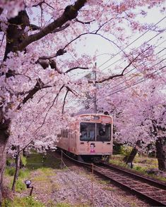 Get Random Travel Ideas Cherry Blossom in Kyoto - Japan 🌸🌸🌸 . Pic by ✨ for a feature 💖 Cherry Blossom in Kyoto - Japan 🌸🌸🌸 . Pic by ✨ for a feature 💖 44 Meanwhile In Asia Photos That Will B. Tree Wallpaper Iphone, Of Wallpaper, Nature Wallpaper, Trendy Wallpaper, Photo Japon, Japan Photo, Cherry Blossom Japan, Cherry Blossom Season, Cherry Blossoms