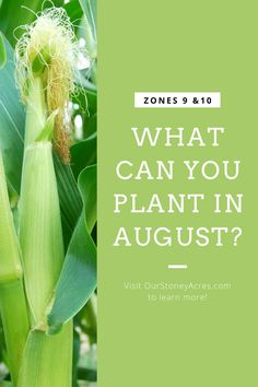 If you live in zones 9 or 10 you may be wondering what to plant in August in your garden. There are still some crops that you can plant this month. #gardening #backyardgardening #vegetablegardening