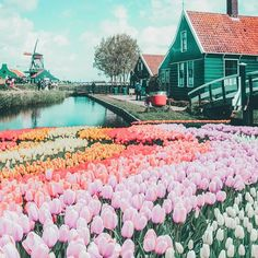 Top things to do in the Netherlands! See the canals of Amsterdam, fields of tulips, Anne Frank Museum, Cube Homes of Rotterdam, and Zaandam Netherlands. adventure travel Top Things to do in the Netherlands Anne Frank, Destination Voyage, European Destination, Travel Aesthetic, Travel Goals, Travel Tips, Travel Hacks, Quick Travel, Maui Travel