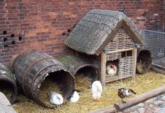 Another awesome idea for the duck houses! (Hubby has a think for whiskey barrels anyway...)