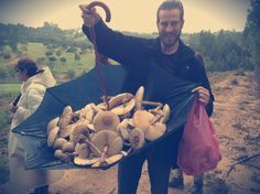 Nós trouxemos para você um guia completo para a produção doméstica em pequena escala de três das variedades mais deliciosas de cogumelos.