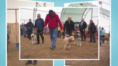 Keshet Kennels/Rescue - First Annual NDWCC Dog Training & BBQ