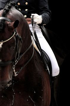The elegance of equestrian sports is no secret, but when you look closely at the finer details of dressage you see the magnificence of horse and rider performing in harmony. Pretty Horses, Horse Love, Horse Girl, Beautiful Horses, Horse Photos, Horse Pictures, Cavalo Wallpaper, Horse Wallpaper, Dressage Horses