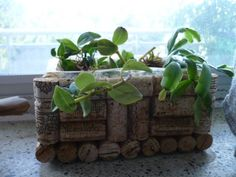 Put in You Plants and enjoy. This is great box for succulants.