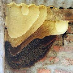 Amazing pic of the progressive use of honey combs~