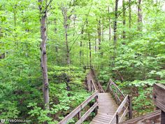 Howard Collier State Nature Preserve is 115 acres with about miles of hiking trail. It borders the Sandusky River and has many spring wildflowers. Ohio Hiking, Hiking Trails, Spring Wildflowers, Preserves, Wild Flowers, Acre, River, Wildflowers, Mornings