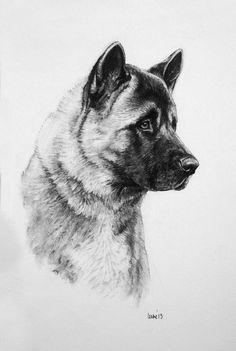 Akita dog drawing Limited Edition fine art print H Irvine