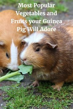 Most popular vegetables and fruits your guinea pig will adore