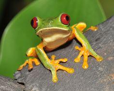 Exóticos animales te esperan en Costa Rica.