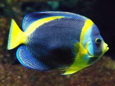 Ocean Park Fish- screenshot