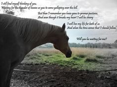 """horses in heaven poems   ... our """"gone to heaven"""" horses! at the Horse Chat forum - Horse Forums"""