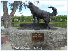 Shep a Fort Benton: Forever Faithful
