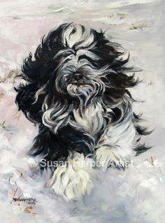 web-Tibetan-Terrier-9
