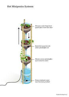 Deze kleine aquaponics-installatie staat leuk en is duurzaam. Planten en vissen worden samen gekweekt en helpen elkaar overleven. De Miniponics bestaat uit…