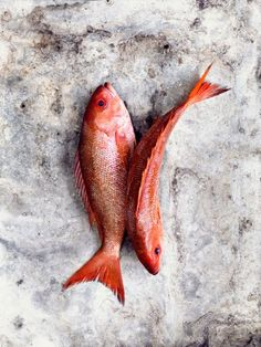 two fish cuddling Food Photography Styling, Food Styling, Raw Food Recipes, Fish Recipes, Red Fish, Pink Fish, Fish Dishes, Fish Art, Still Life Photography
